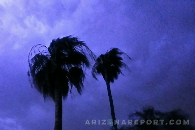 palm trees blowing against purple storm clouds lilluminated by lightning.