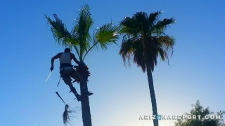 palm tree trimming contractor in Phoenix