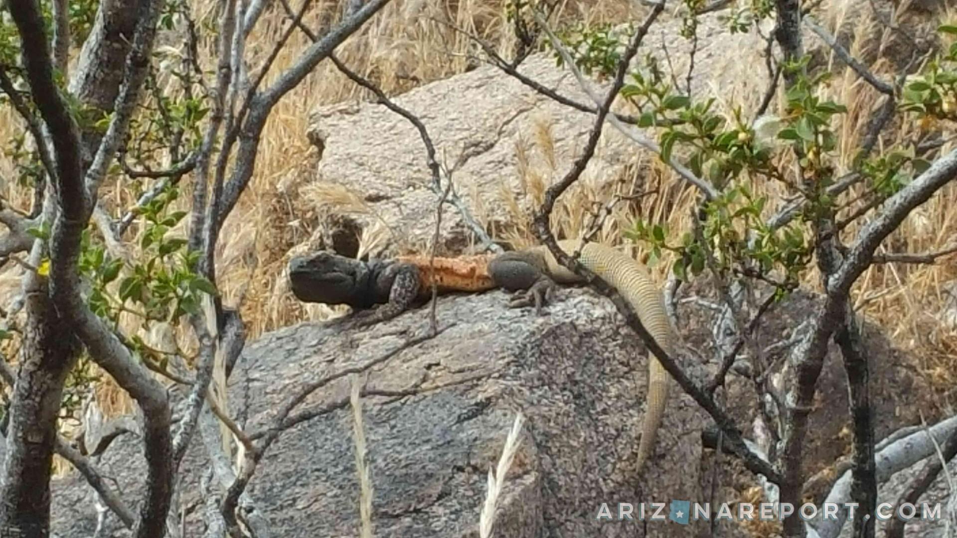 chuckwalla rock Sunrise Trail hike Scottsdale