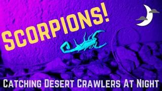 scorpion hunt dark night blacklight Phoenix Arizona
