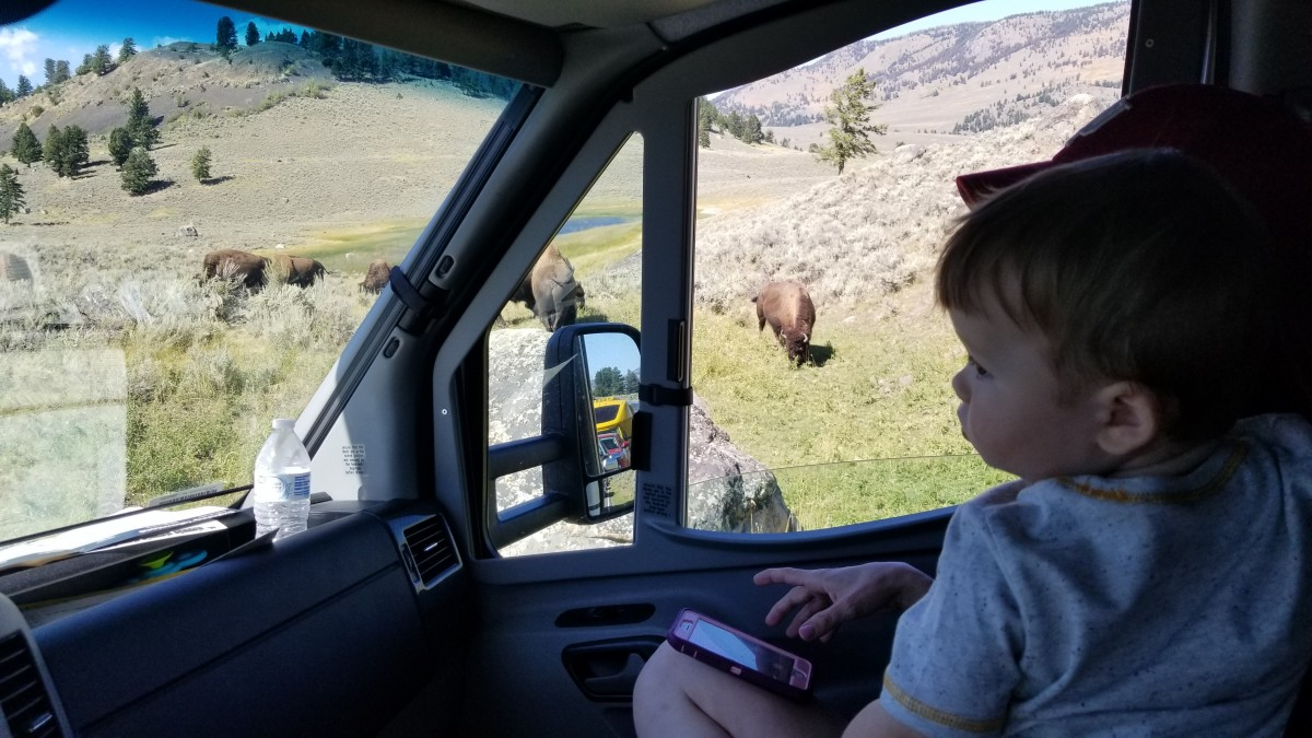 bison buffalo Yellowstone Lamar Valley baby watching RV